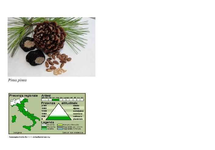 Vivaio Margine Rosso : Piante prodotte micorrizate vivaio mediterraneo piante